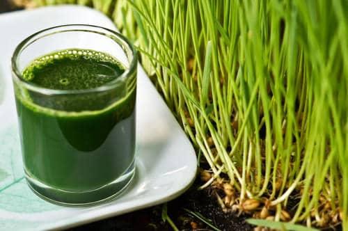 Why Choose Between Spirulina and Wheatgrass?
